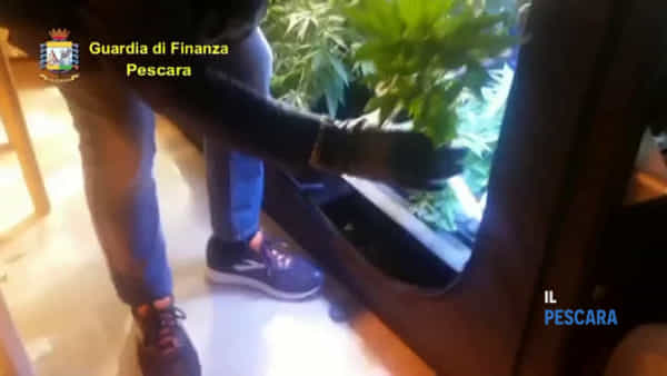 VIDEO | Guardia di Finanza sequestra oltre 4 kg di marijuana, un arresto