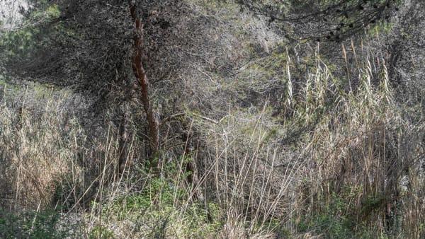'La Selva Chiara', personale di Paolo dell'Elce al Museo delle Genti d'Abruzzo